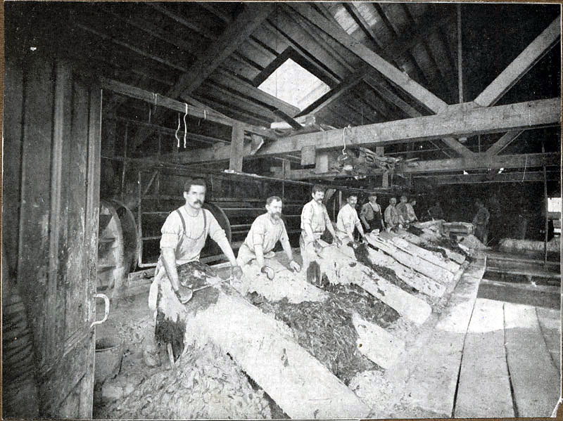 Immigrants were especially prevalent among leather workers, such as these men who labored in a tannery near the foot of Market Street in 1890.